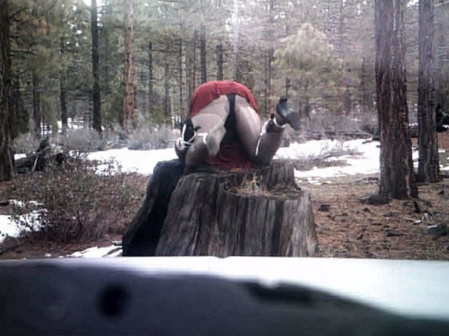 roped on tree stump